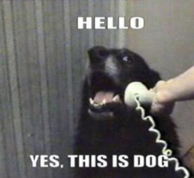 140306dogphone