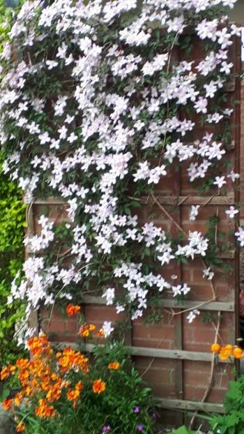 200506 flowers